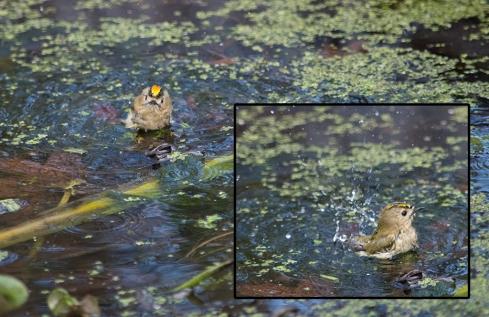 goldcrestbath