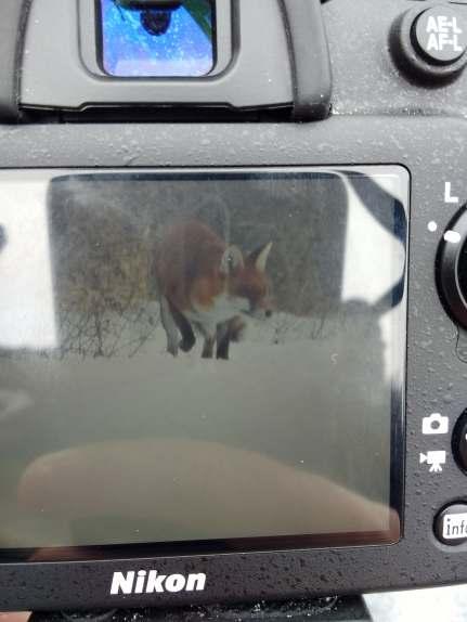 foxoncamera